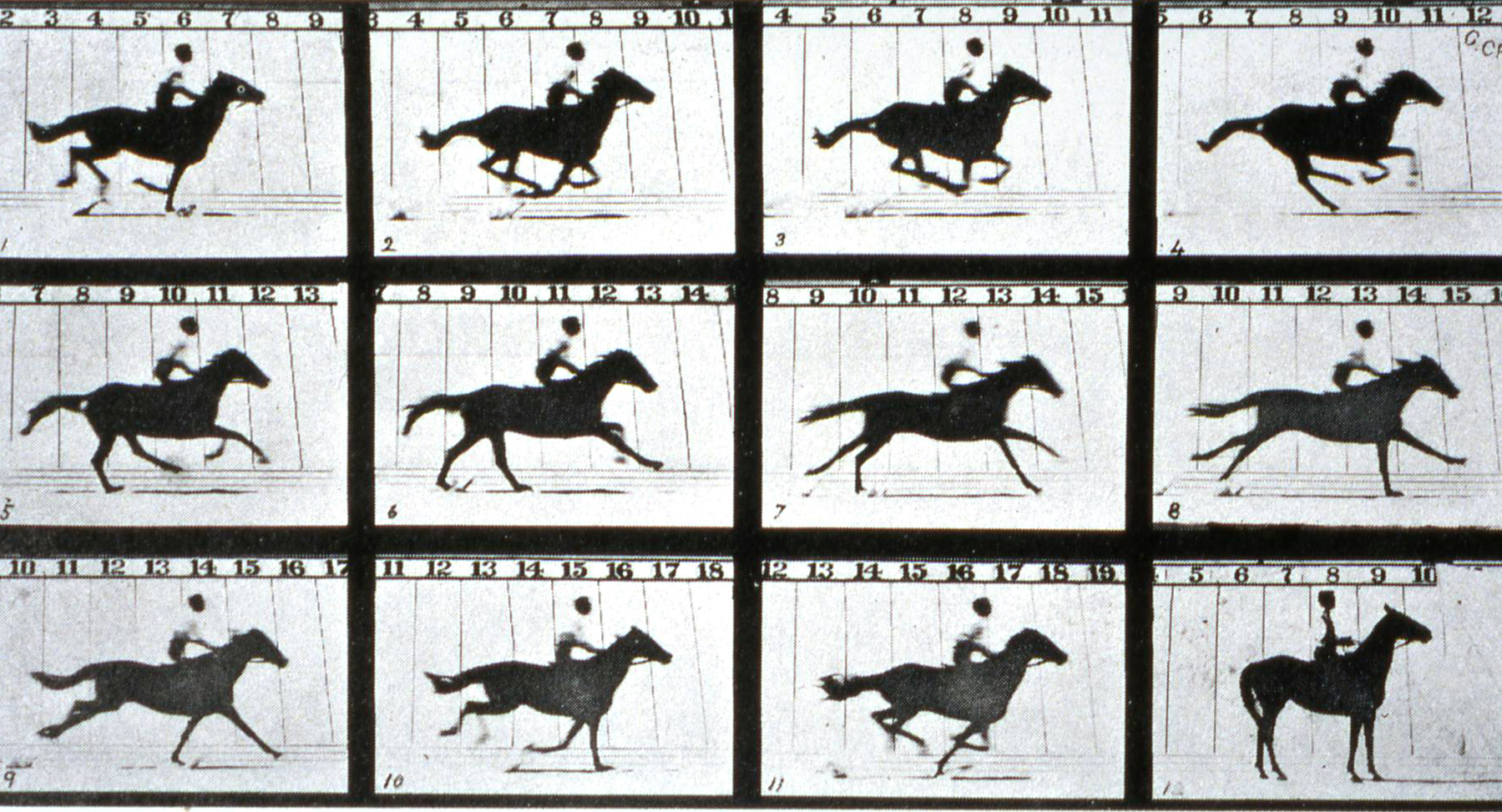 Muybridge studies a galloping horse